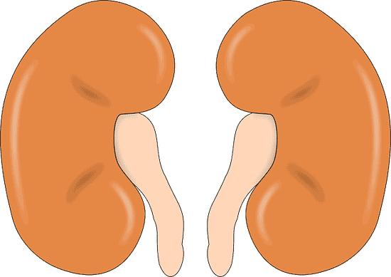 20 beste Lebensmittel für eine gesunde Niere