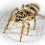Ein Spinnenbiss? 10 Symptome und 8 Behandlungstipps