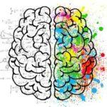 Ist die linke oder rechte Gehirnhälfte dominant? Linkshänder sind klüger? Die Wahrheit hier