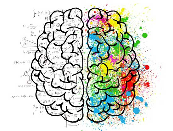 Ist die linke oder rechte Gehirnhälfte dominant Linkshänder sind klüger