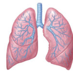 Tipps zur Verbesserung der Lungengesundheit und Reinigung der Lunge (3 Schritte)