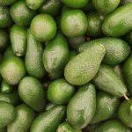 Top 9 Avocadoöl Ernährung Auswirkungen, die Sie vielleicht nicht kennen