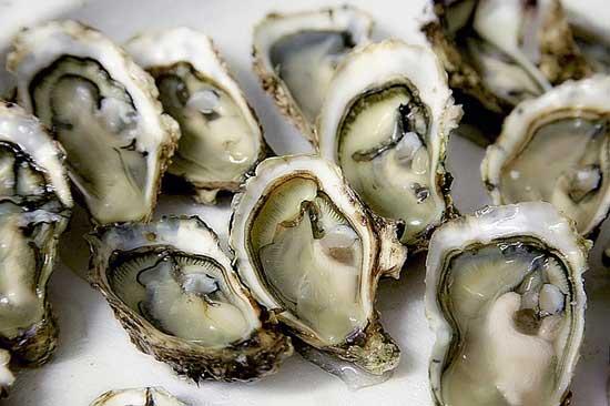 Warum ist Auster gesund 11 gesundheitliche Vorteile