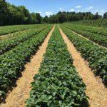Was genau ist Bio-Lebensmittel? (8 gesundheitliche Vorteile von Bio-Lebensmitteln)