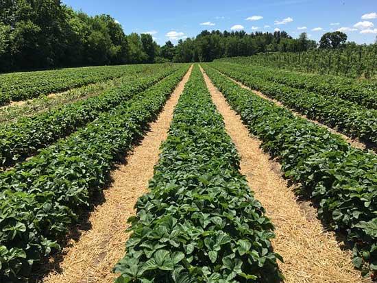 Was genau ist Bio-Lebensmittel (8 gesundheitliche Vorteile
