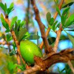 Was ist Arganöl? (9 gesunde Wirkung aus der Praxis)