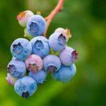 Welche Früchte enthalten das höchste Protein? (Top 15 Liste!)