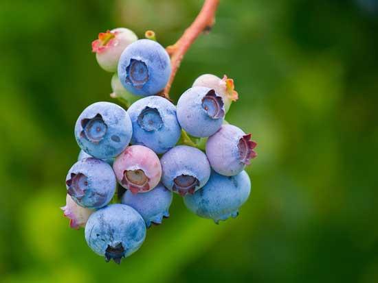 Welche Früchte enthalten das höchste Protein (Top 15 Liste!)