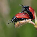 Welche Nahrung kann die Libido und die sexuelle Funktion steigern? (11 aphrodisische Nahrungsliste)