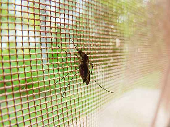 11 beste natürliche Hausmittel gegen Malaria
