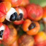 11 echte Erfahrung gesunde Wirkung von Guarana (einschließlich Extrakt, Pulver, Kapsel, Getränk)