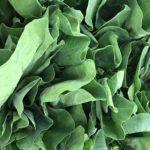 11 erstaunlicher gesundheitlicher Nutzen von Senfgrün (und warum)