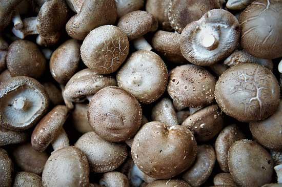 11 gesunde Wirkung von Shiitake-Pilzen
