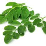 Was ist Moringa? 15 gesunde Ernährungswirkung der Moringa-Pflanze (oder des Tees)
