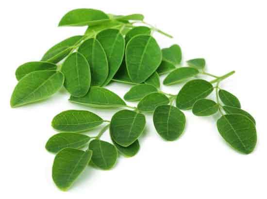 15 gesunde Ernährung Wirkung von Moringa Oleifera (und Tee)