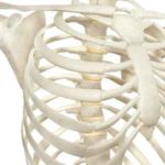 6 Ursachen für einen unebenen Brustkorb und wie man ihn repariert