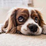 7 Dinge schlecht für Ihr Haustier (aber Sie denken, sie sind gut!)