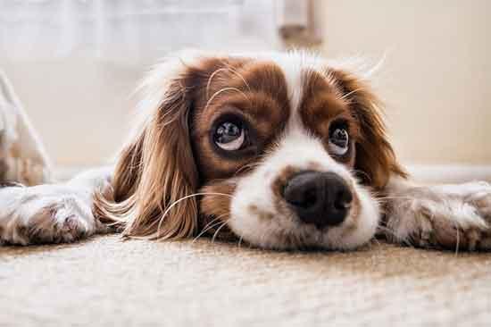 7 Dinge schlecht für Ihr Haustier, die Sie vermeiden sollten