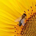 Wie wird Honig hergestellt? 9 Honigsorten&Varianten (mehr)