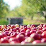 Ist Bio-Lebensmittel gesund? Nicht wirklich!