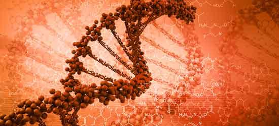 Gentherapie Heilung Hämophilie