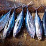 Kennen Sie die 12 Ernährungseffekte von Thunfisch? Lesen Sie es hier!