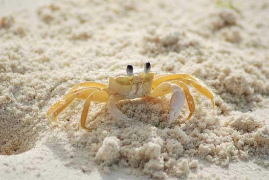 Krabbenfleisch essen 11 erstaunliche gesunde Wirkung, die Sie bekommen können!