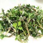 Top 11 nachgewiesener Gesundheitseffekt von Wermut (inkl. Tee oder Kapseln)