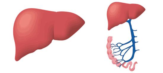 Top 11 Symptome und Warnzeichen von Hepatitis c