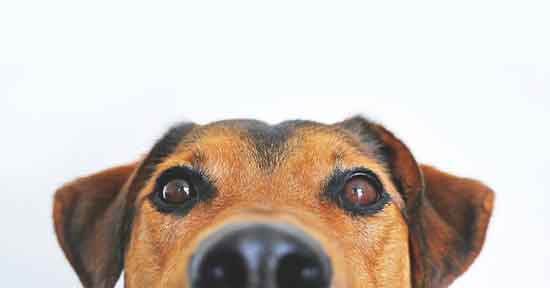 Top 11 gesunde Wirkung des Besitzes eines Hundes Haustieres