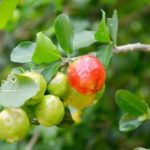 Was ist Acerola? 11 erstaunliche gesunde Wirkung der Acerolafrucht
