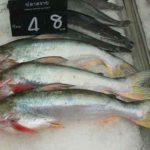 Swai-Fisch: sollte man ihn essen oder meiden? (gesund oder ungesund?)