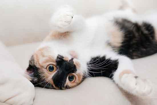 schlafen mit einer Katze gesund oder ungesund