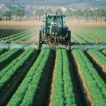 12 Lebensmittel mit hohem Pestizidgehalt
