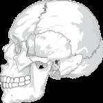 Delle im Kopfschädel: 5 Ursachen und wie man sie behandelt