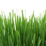 Grasausschlag: 4 Ursachen, Symptome und Behandlung
