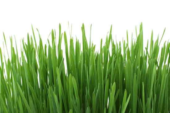 Grasausschlag 4 Ursachen, Symptome und Behandlung