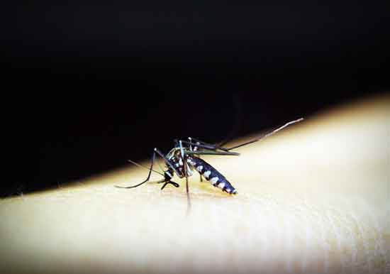 Mückenstich Symptome, Heimbehandlung