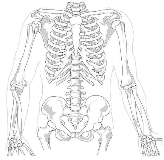 Schmerzen unter dem rechten Brustkorb 12 Ursachen und Behandlung