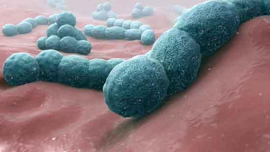 Staphylokokken-Meningitis Symptome, Ursachen, Behandlung