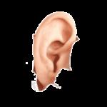 Trommelfellspasmus: Symptome und Ursachen (mehr)