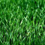 Grasallergie: Definition, 9 Symptome und Behandlung