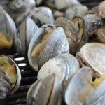 Was sind Venusmuscheln? 9 Gründe zu essen!