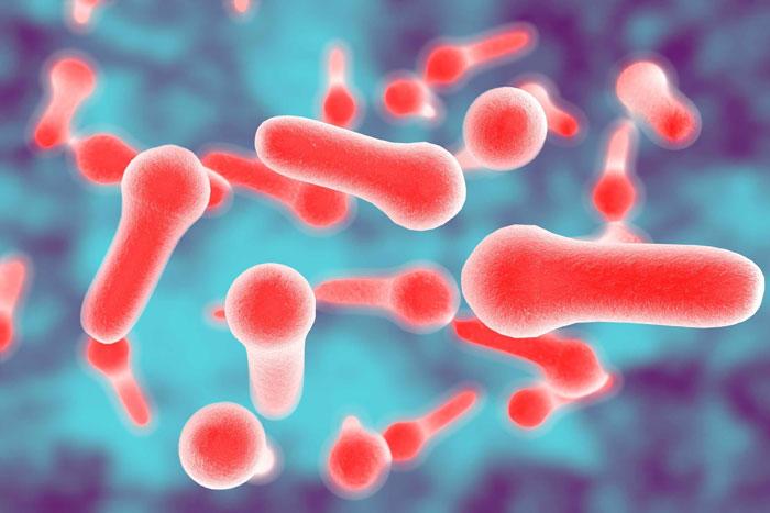 Botulismus Ursachen, Symptome, Behandlung