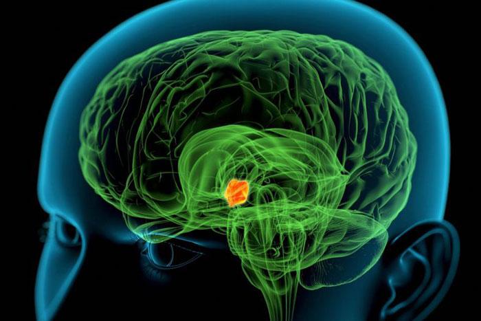 Hypothalamus Anatomie, Funktion, Bedingungen, Gesundheitstipps