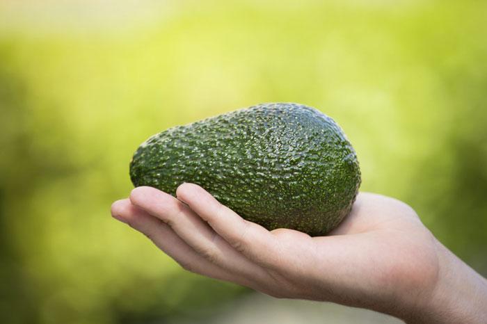 Ist Avocado eine Frucht oder ein Gemüse