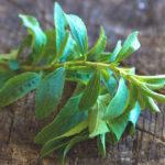 Stevia: Nebenwirkungen, Nutzen, Wirkung, wie man sie anwendet