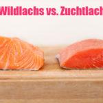 Wildlachs vs. Zuchtlachs: Welche Lachsart ist gesünder?