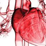 kongestive Herzinsuffizienz (Stauungsinsuffizienz): Ursachen, Symptome, Behandlung, Definition