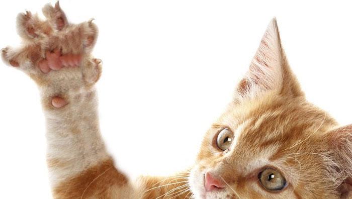 Was ist Katzenkratzerfieber Symptome, Ursachen, Behandlung, Diagnose